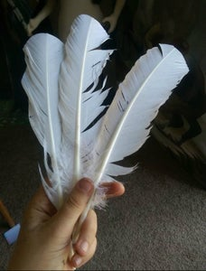 Choosing a Feather