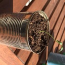Recycled flower pot from tin cans