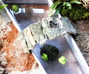Turtle Habitat for Baby Turtles | Homemade Turtle Garden
