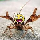 CrayfishYAY
