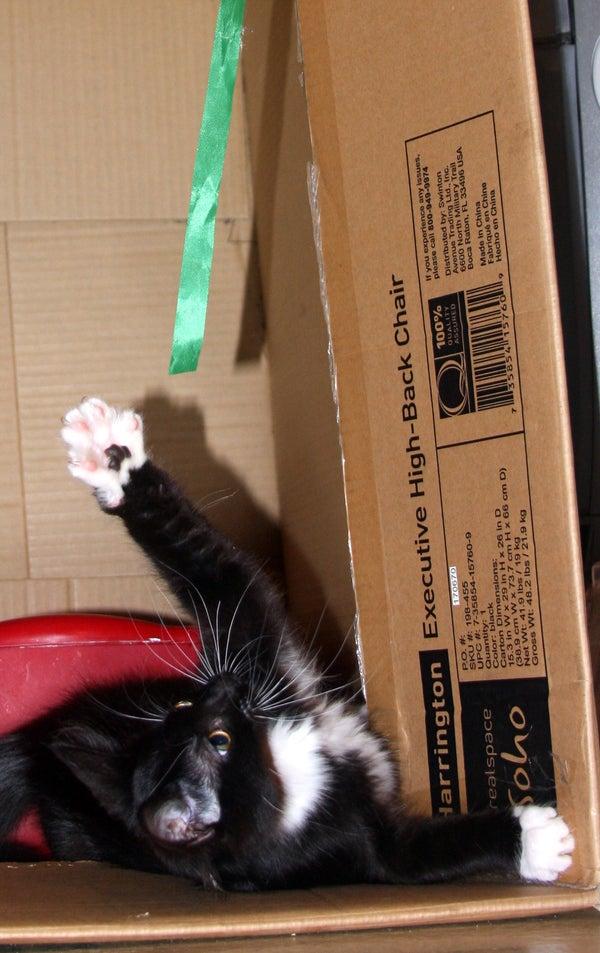 Kitty Play Room