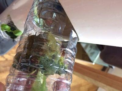 Reuse Plastic Bottles for Root Holders
