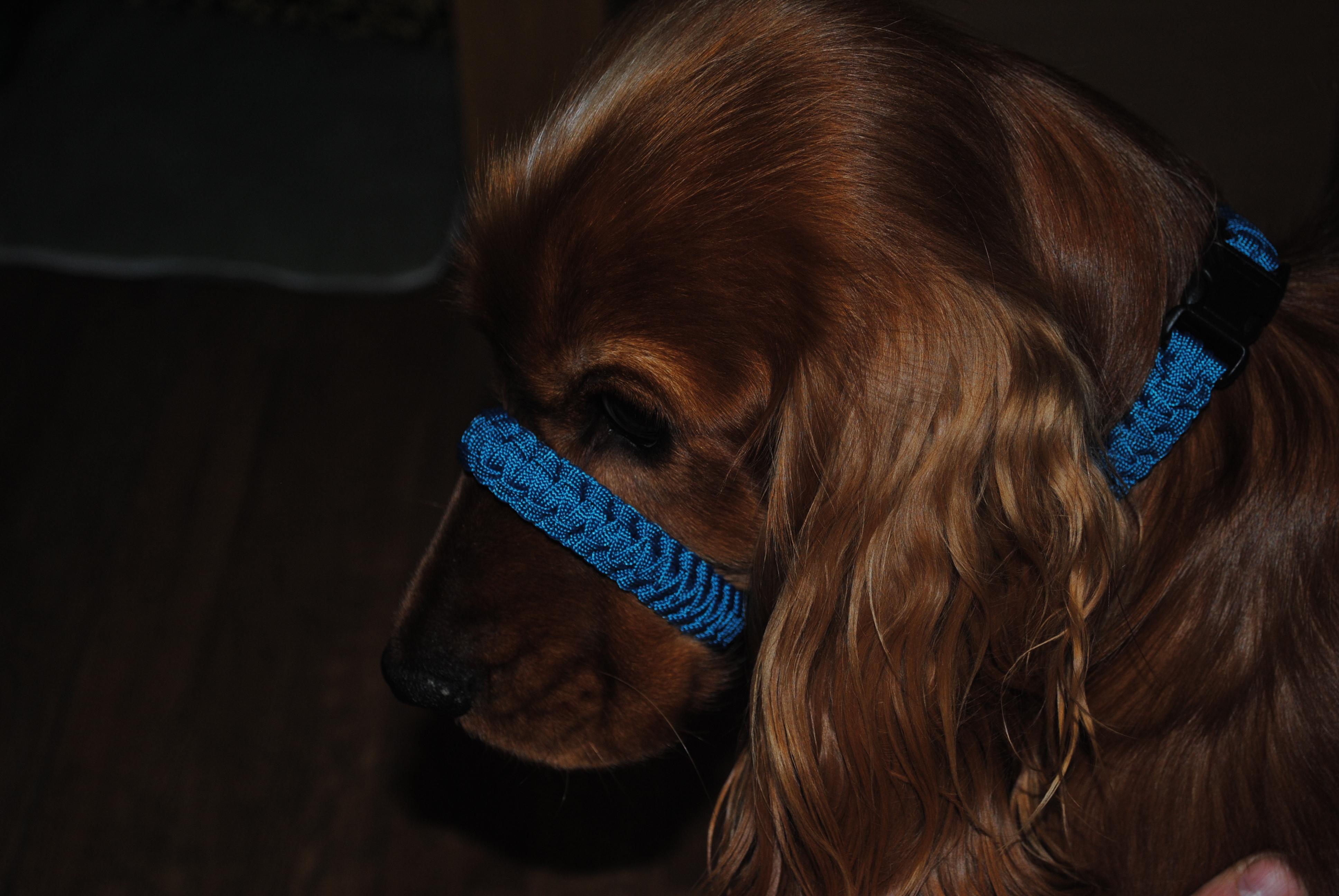 Paracord Dog Collar, Halti Collar