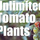 Unlimited Free Tomato Plants - Simple Garden Hack