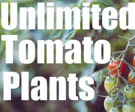 Unlimited Free Tomato Plants - Simple Garden Hack