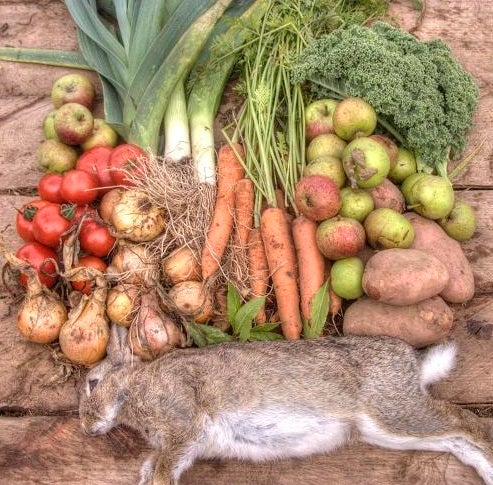 Braised Wild Rabbit Stew- From Field to Table