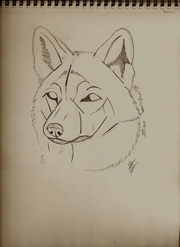 Guides to Drawing Wolves