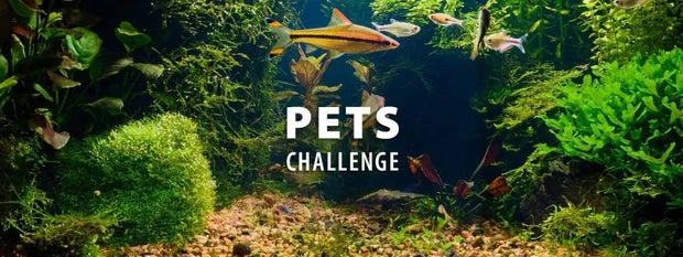 宠物挑战赛