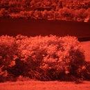 (near) infrared photography