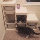 Cat Furniture IKEA Hack