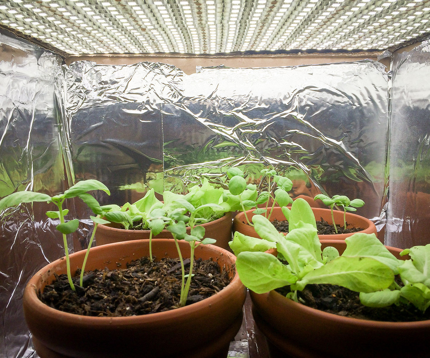 Small Indoor LED Plant Grow Room