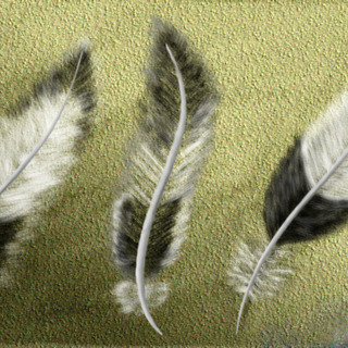 Digital Painting Lesson 2: a Feather