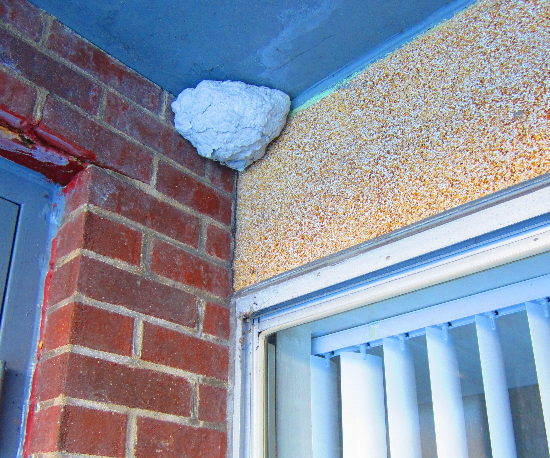 Hornets nest hiding spot