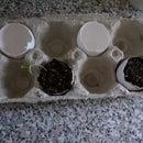 Egg Shell Gardening Pot