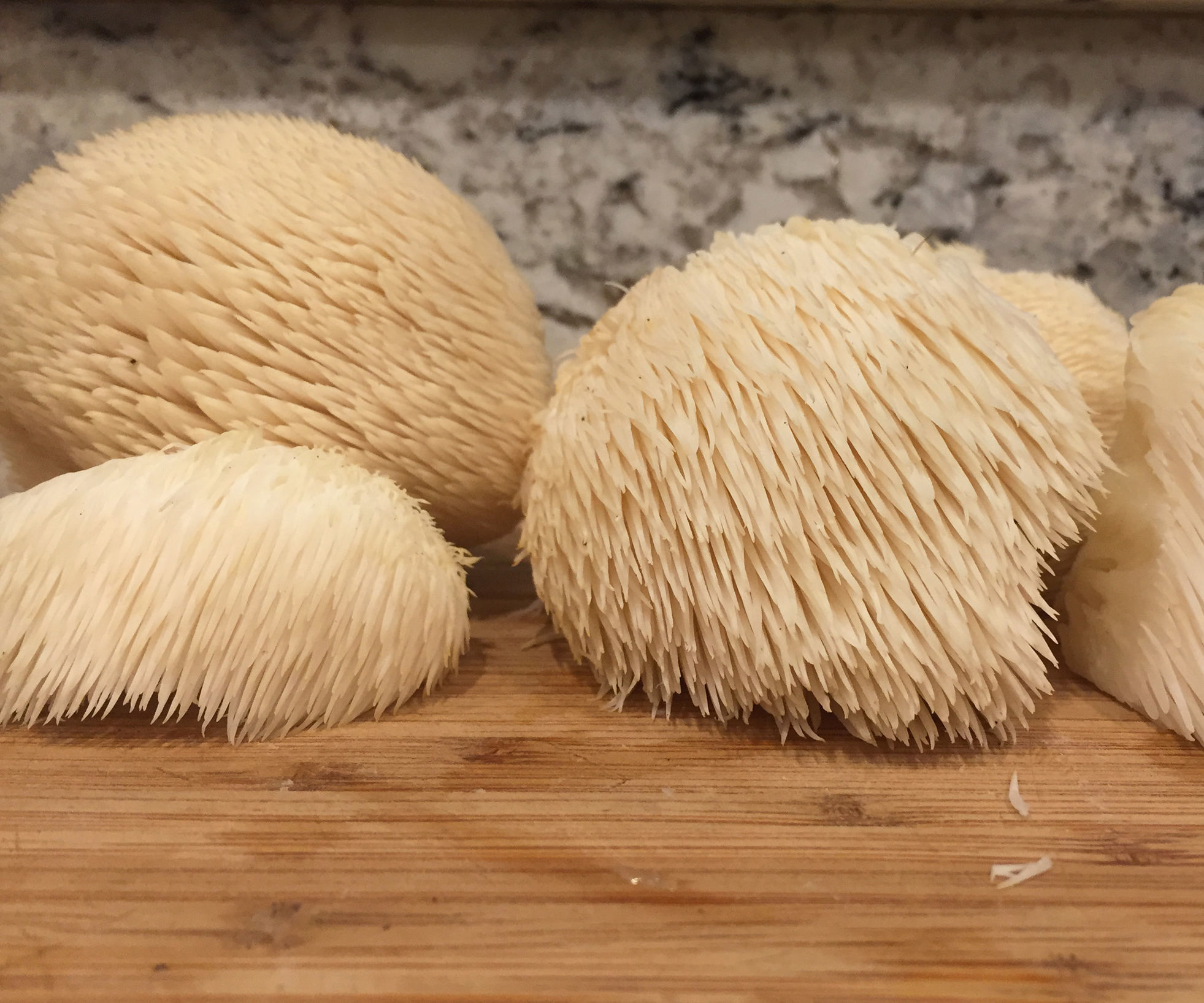 Stalking the Wild Lion's Mane Mushroom