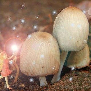 fairies & shrooms.jpg