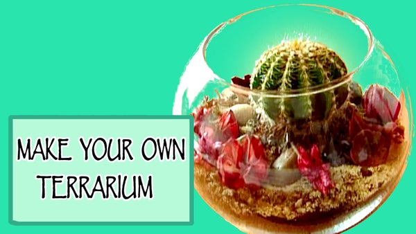 How to Make Your Own Terrarium!!