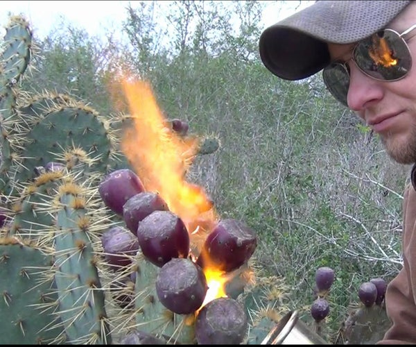 How to Pick and Eat Prickly Pear Cactus