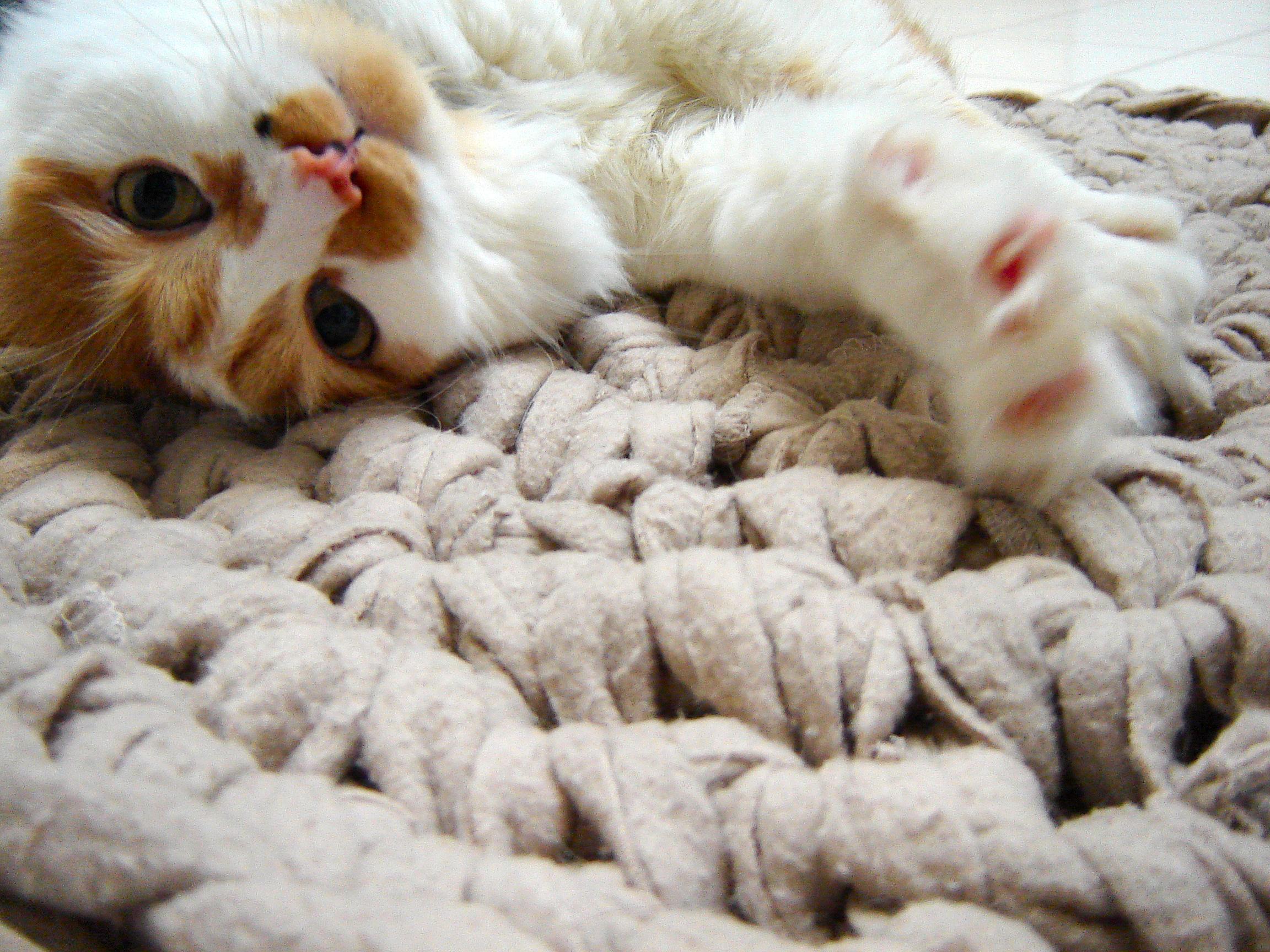 Chunky Crochet Rug