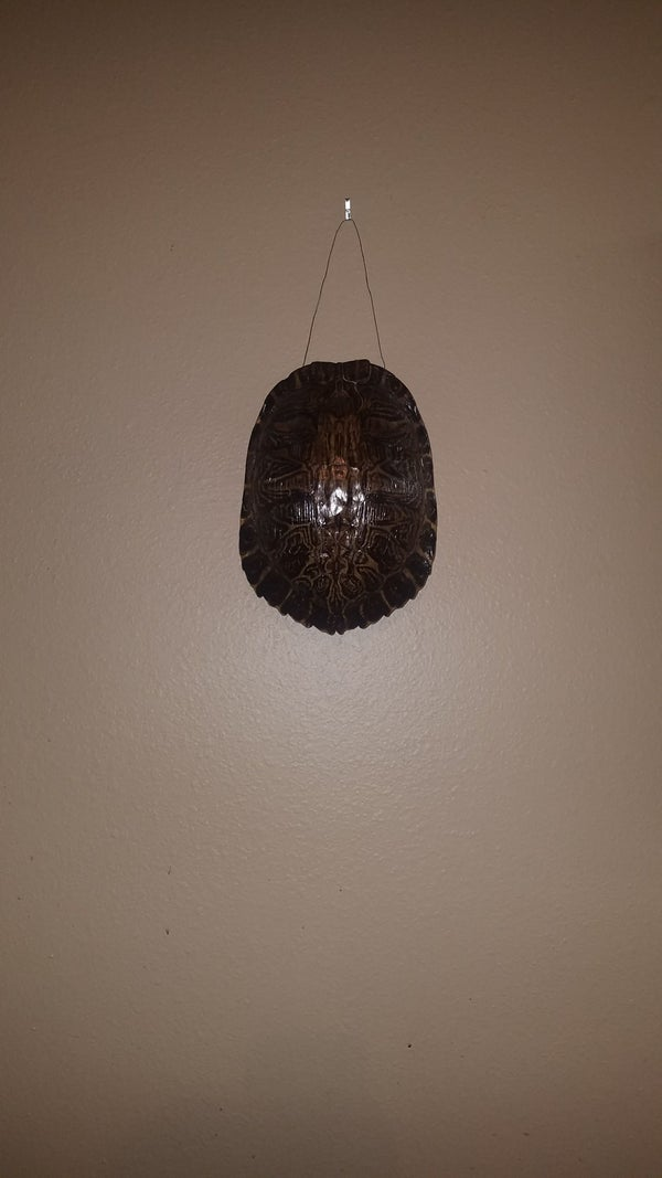 Turtle Shell Hanging