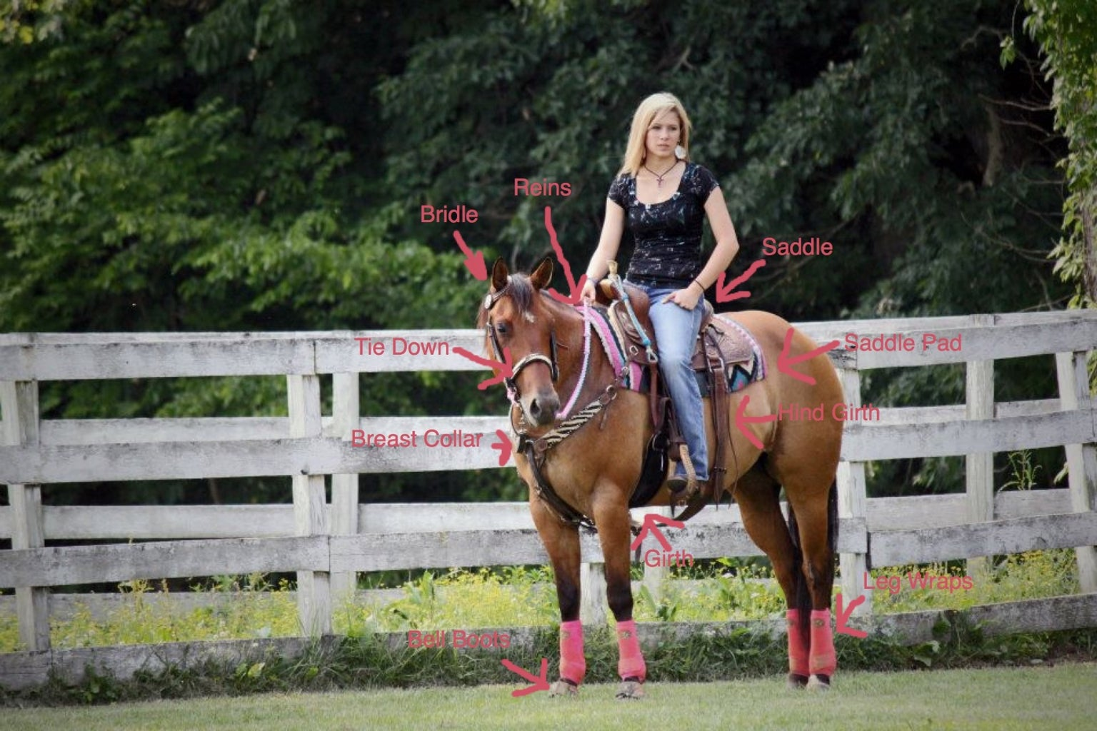 Saddling a Western Horse