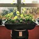 Aquaponics Mars Colony 55 Gallon Home Grow Station