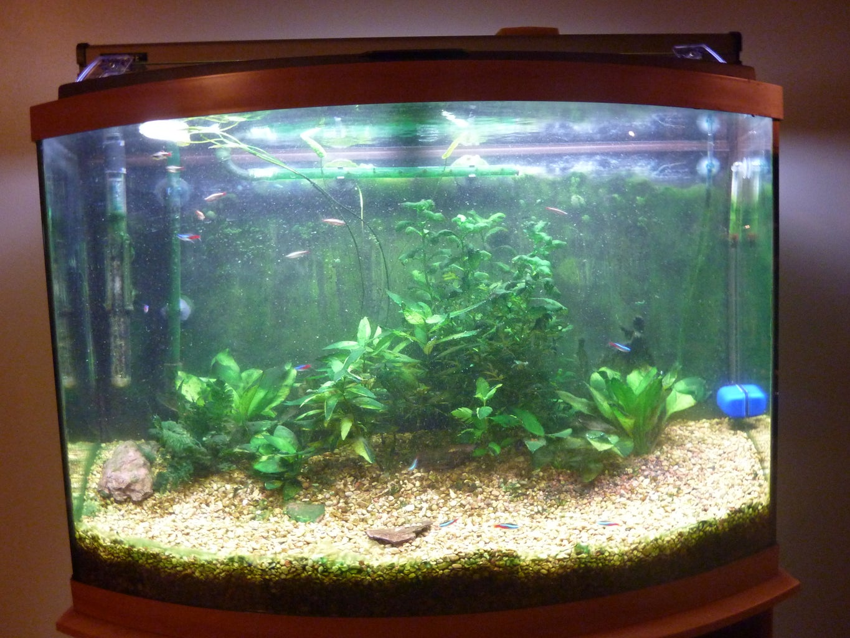 How to Do Complete Routine Aquarium Maintenance
