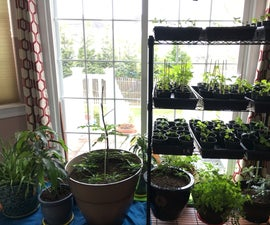 Starting Seedlings Indoors for an Abundant Harvest
