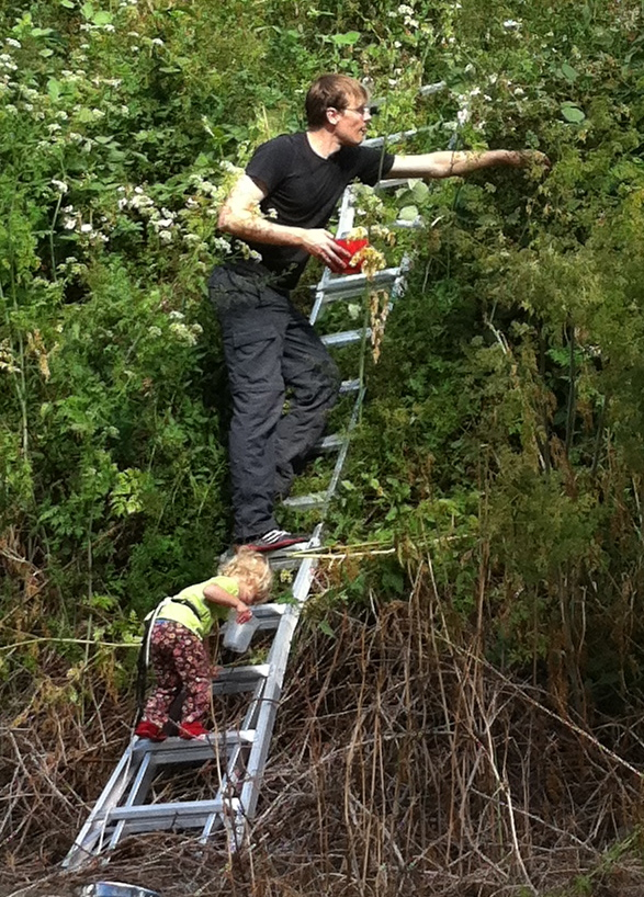 Pick Blackberries with a Ladder