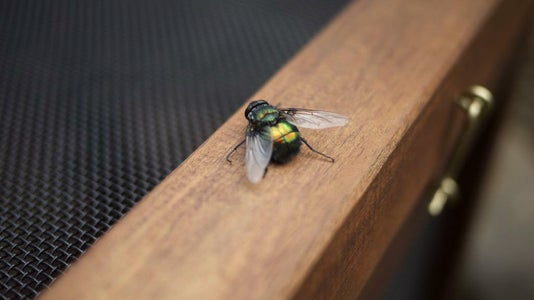 Industrial Fly Trap