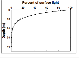 Use Your Measurements to Make Light Assumptions
