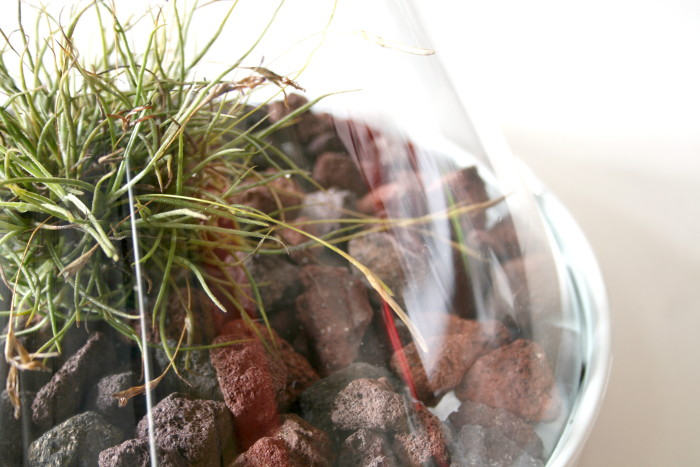Build an Inexpensive Terrarium with Free Plants