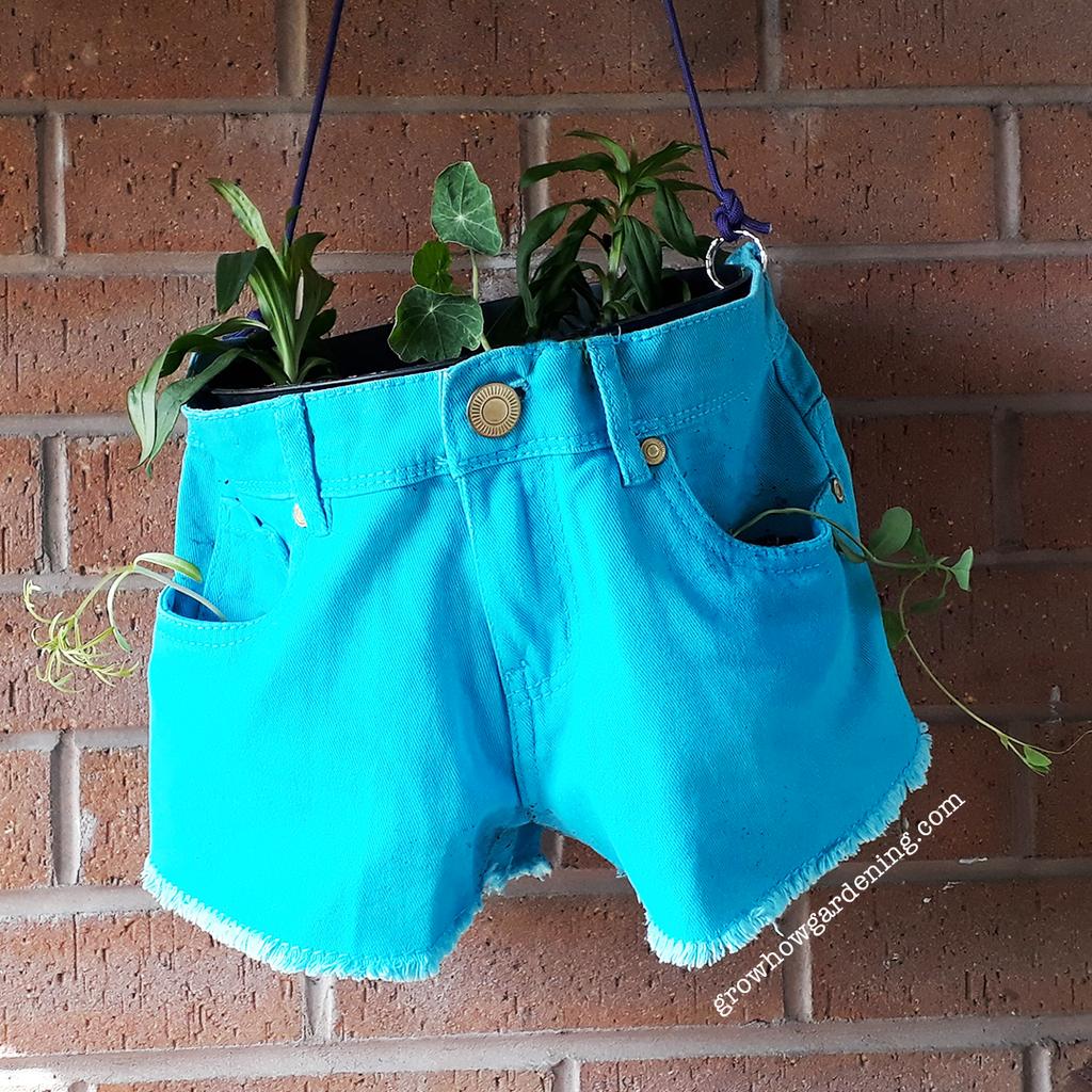 Hot Pants Hanging Basket