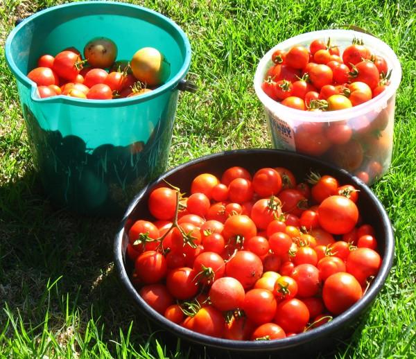Reconfigurable Vegetable Garden Watering System