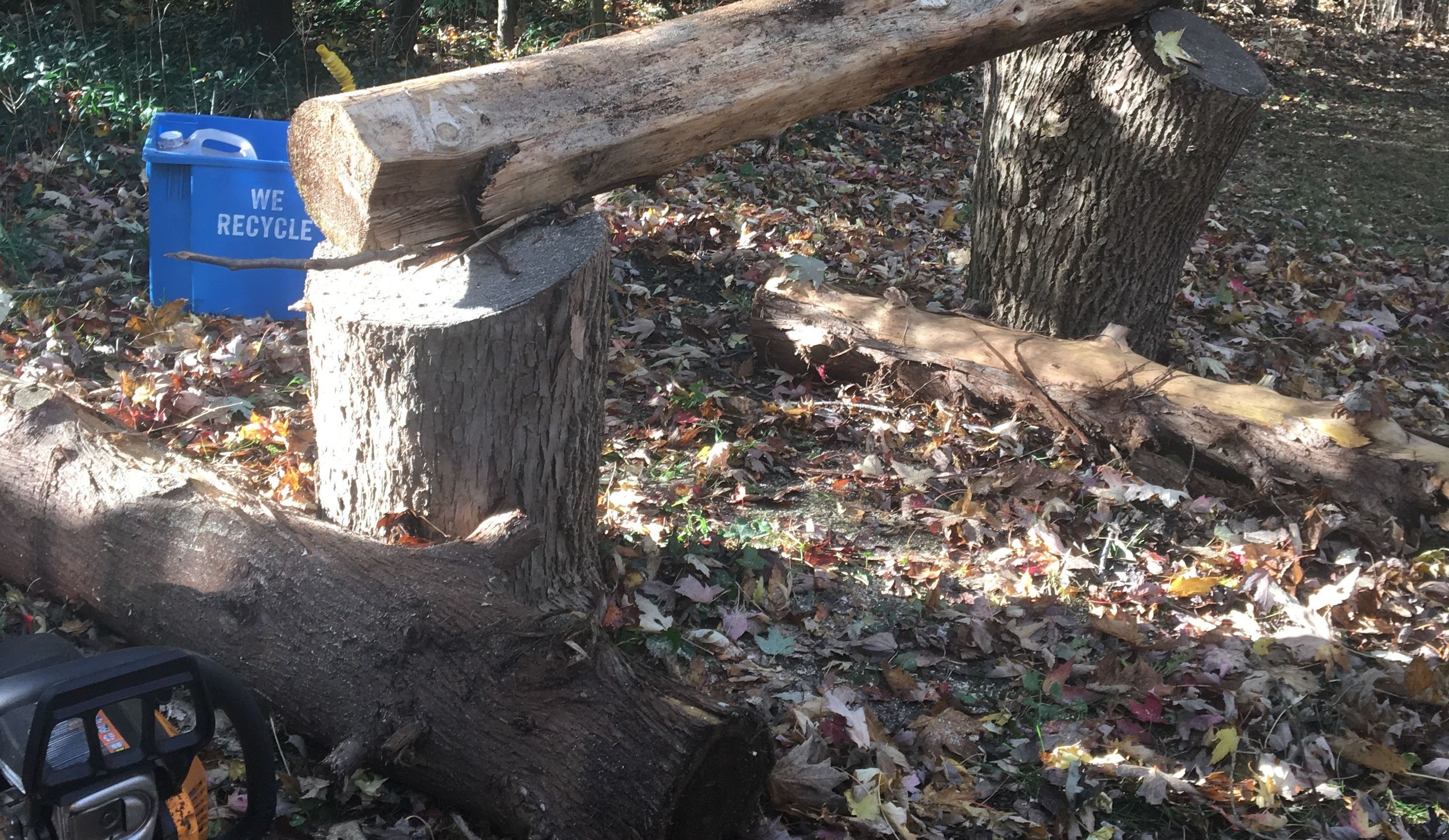 Cutting wood slabs with a chainsaw mill