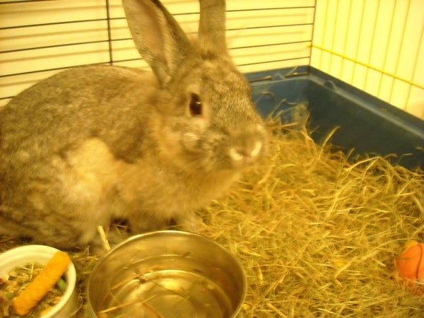 How to Care for a Recently Neutered/spayed Rabbit