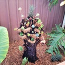 Tree Fern Planter