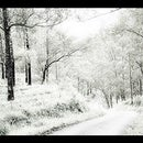 Change a Photo of SUMMER into WINTER in Photoshop