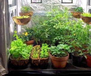 在预算中为vegs种植植物