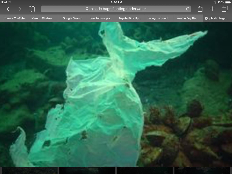 Save Ocean Wildlife at Home