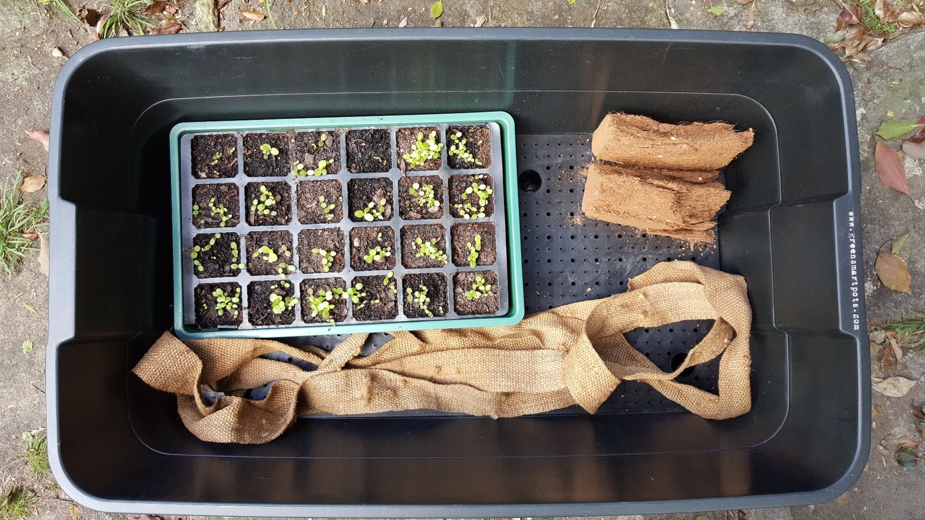 How to Set Up a Vermiponic Wicking Bed
