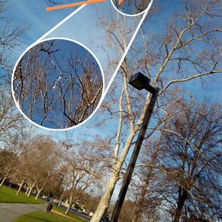 drone in tree.png