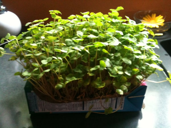 MicroGreen Machine (hydroponic Micro Greens at Virtually No Cost)