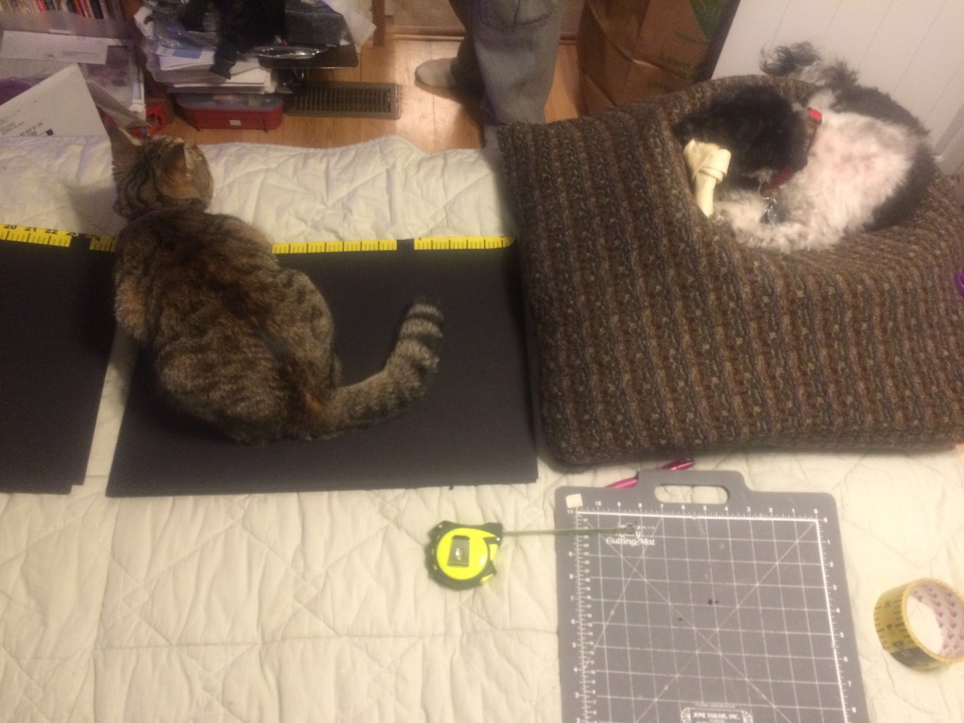 You Will Need the Following Items. ( You Do Not Need My Cat to Interfere, Like He Did in My Project)LOL