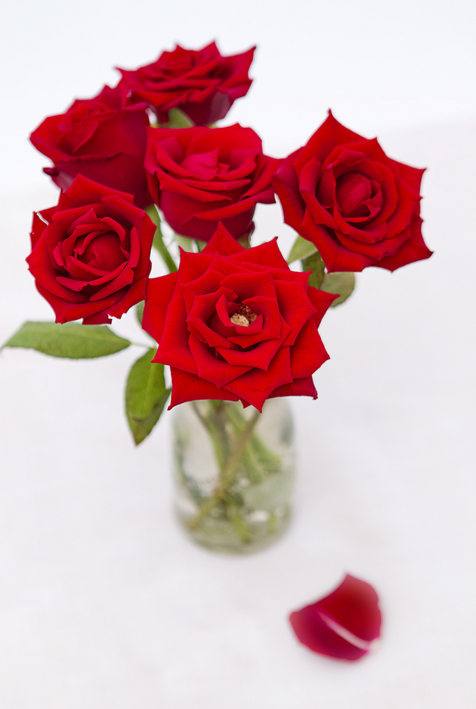 How to Plant Beautiful Roses
