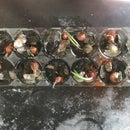 DIY Hydroponic Green Onion System!