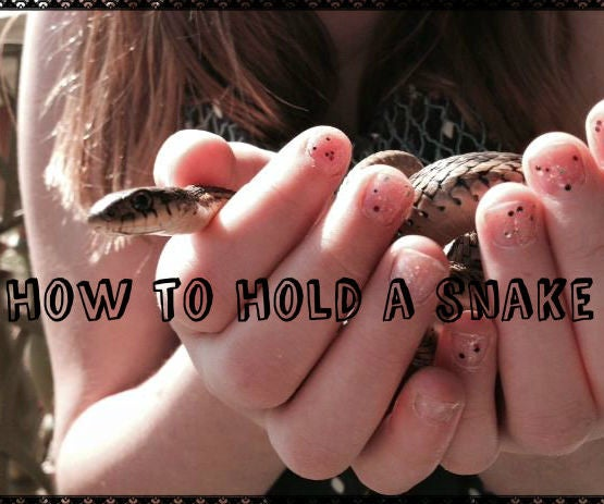 How to Hold a Snake