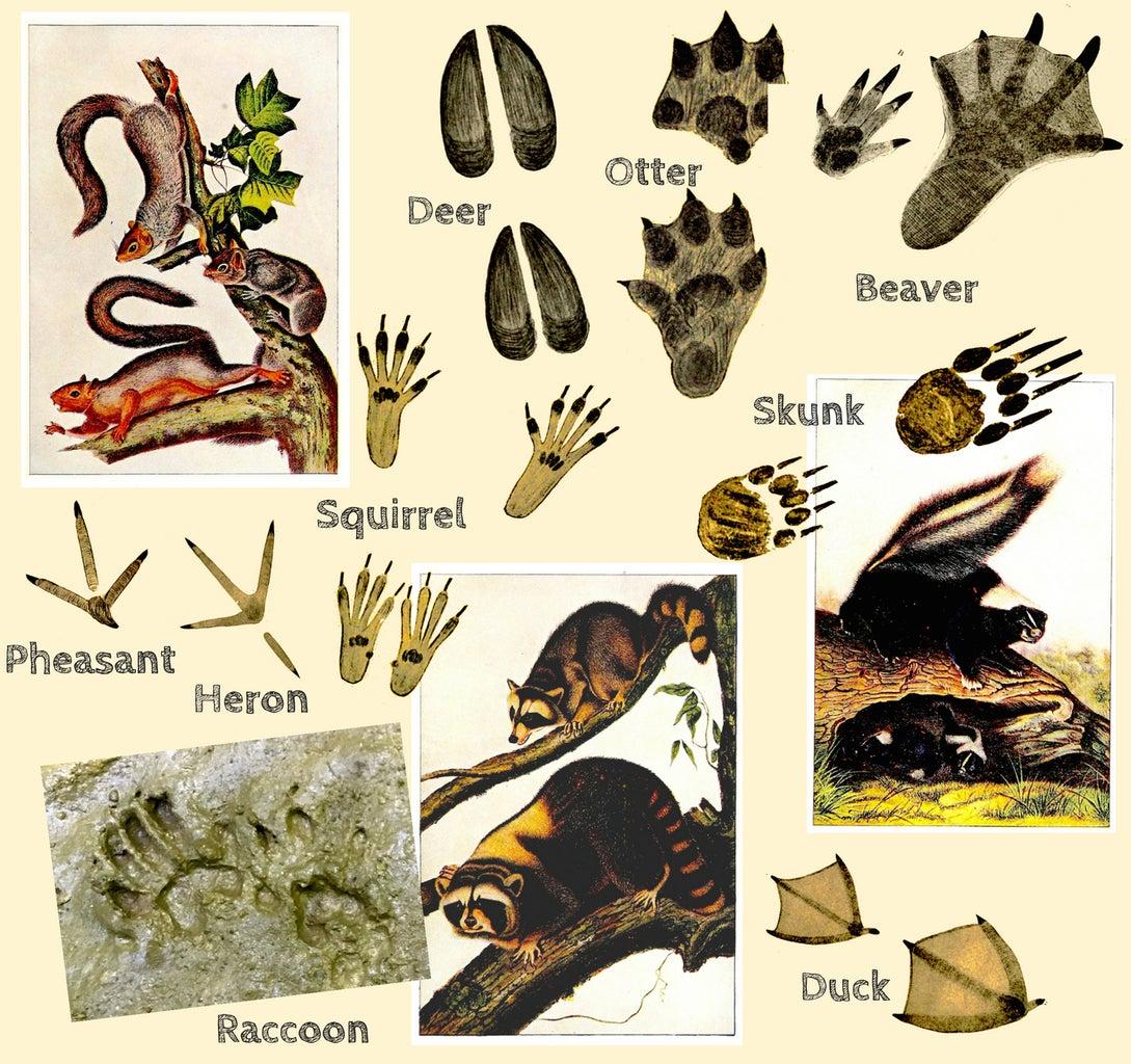 Find Some Wild Animal Tracks!