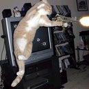 RAMBO the cat