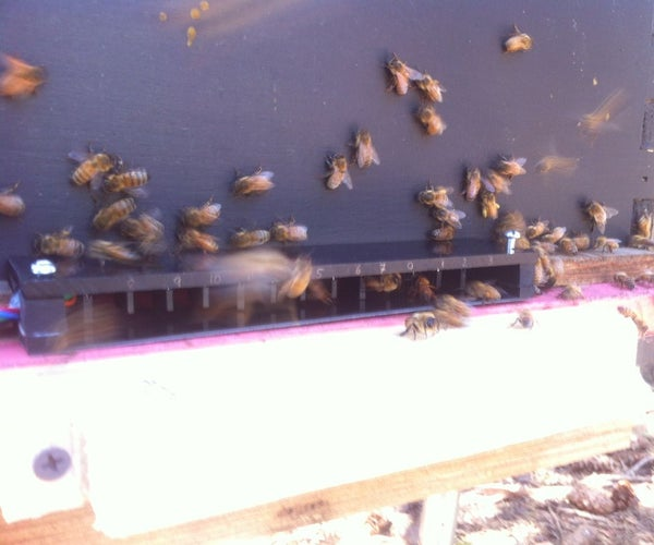 Honey Bee Counter II